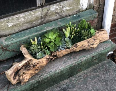 Wooden Succulent Collection