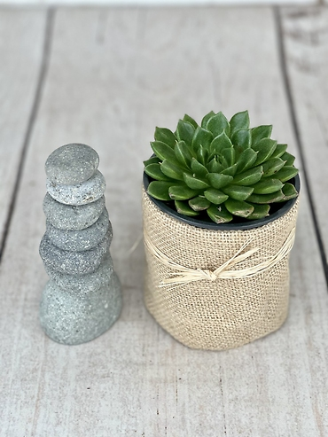 Cairn and Succulent Set