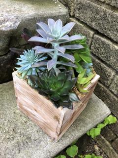 Medium Succulent Box