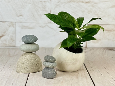Round Stone Peace Lily