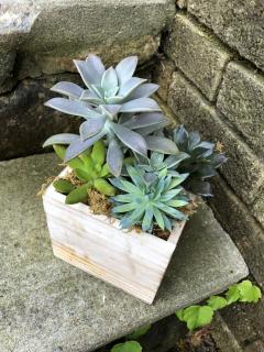 Small Succulent Box