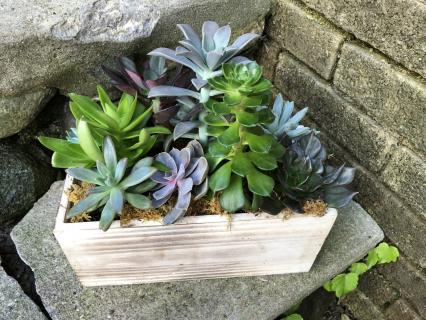 Medium Rectangular Succulent Garden
