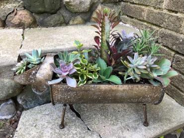 Puppy Planter with Succulents