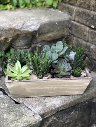 Medium Rectangular Succulent Box